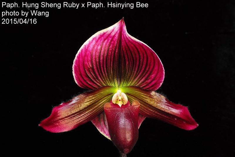 Hung Sheng Bruno Ca 22 00 Dsc00504 Jpg